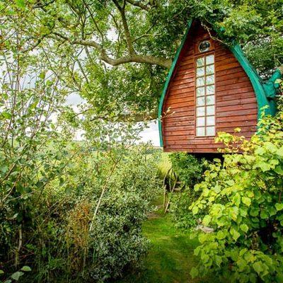 Tree_Sparrow_House_Cornwall_1