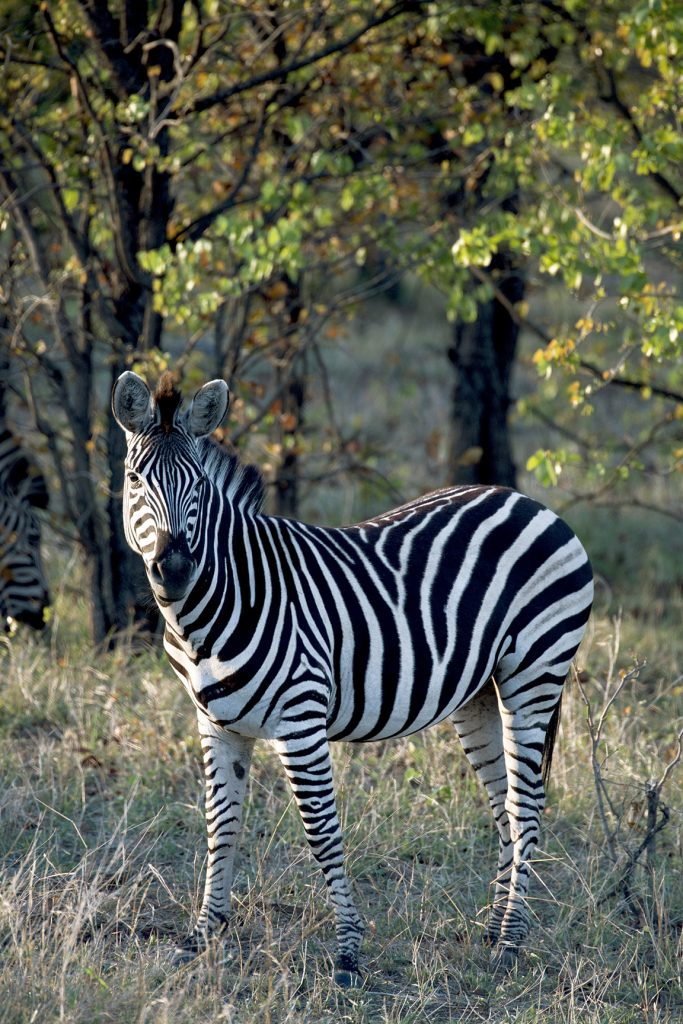viagem à África do Sul